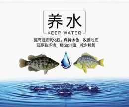水產養殖貼士:夏季高溫時節養魚注意事項