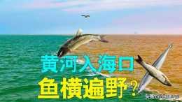 淡水魚在海水裡活不成,那些隨河水流入大海的魚都死了嗎?