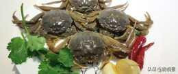大閘(河)蟹—越冬暫養能增收